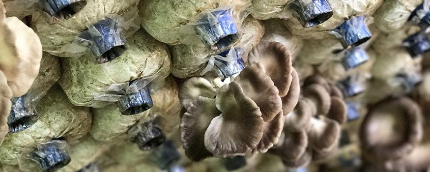 Mushroom-House_WEB