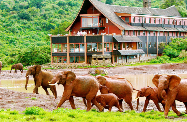Elephants-walking-past-The-Ark